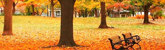fall_leaves.jpg - 58.26 Kb